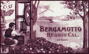 Coltivazione bergamotto